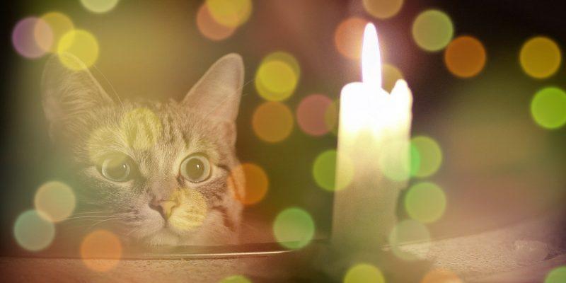 Могут ли отключить свет в квартире за неуплату без решения суда и что делать если это произошло?